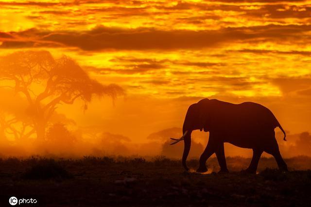 肯尼亚野生动物日出唯美剪影 宛如《狮子王》开场场景令人惊叹