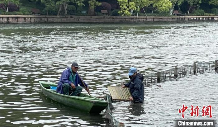 杭州西湖景区增新桥 专供鸳鸯宝宝等水鸟自由进出荷区