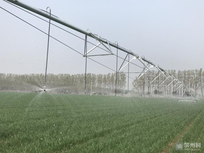 """聚力83工程,走进项目现场 邹平""""高标准农田+""""建设模式提升粮食生产现代化水平"""