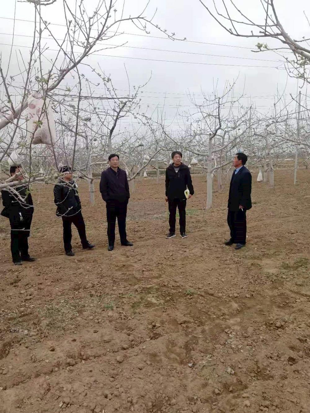 庆阳市果业中心督查正宁县春季果业生产及果树冻害预防工作