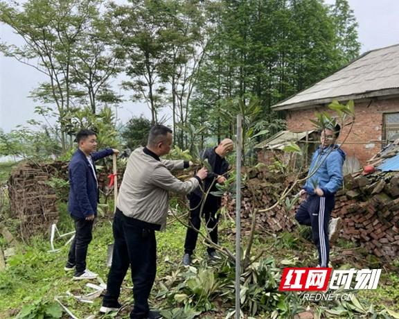南县林业局:我为群众办实事 乡间庭院添新绿