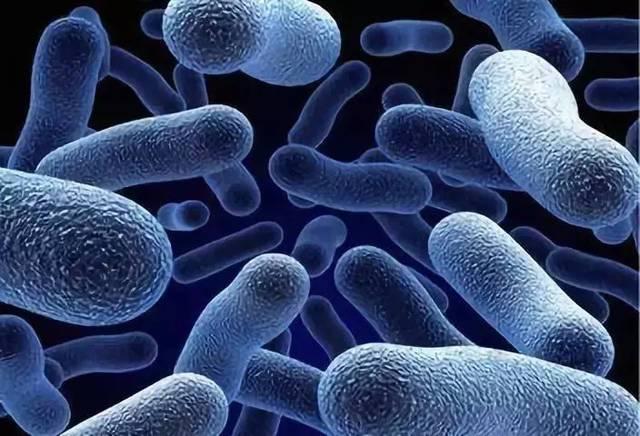 超级福利,38元体验微生态重建疗法,破解阴道炎复发难题!