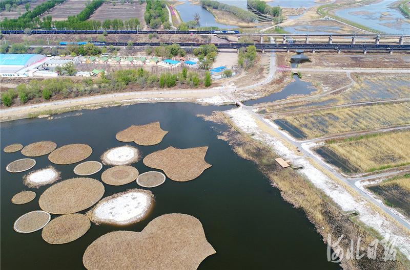 河北怀来:永定河8号桥水质净化提升