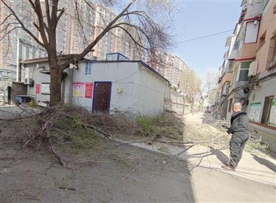 【青城眼】大树遮挡采光 社区帮忙修剪