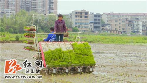 蓝山:积极落实惠农政策 推动水稻生产机械化