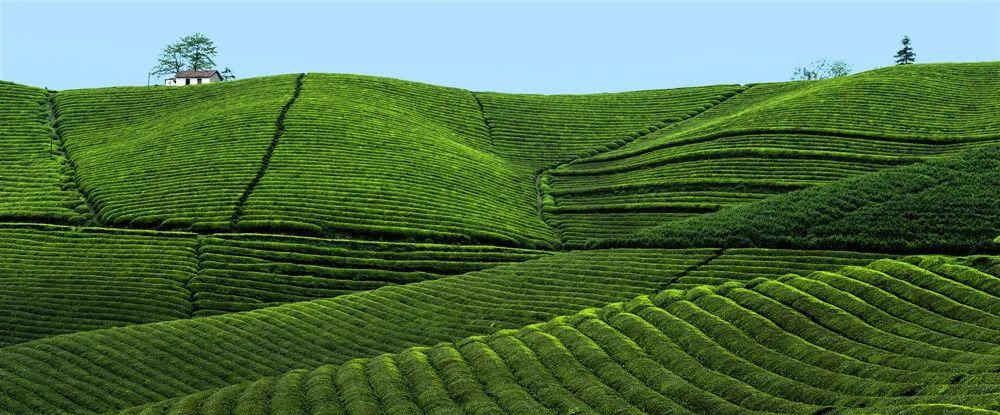 2021杭州市全民饮茶日活动在余杭开启