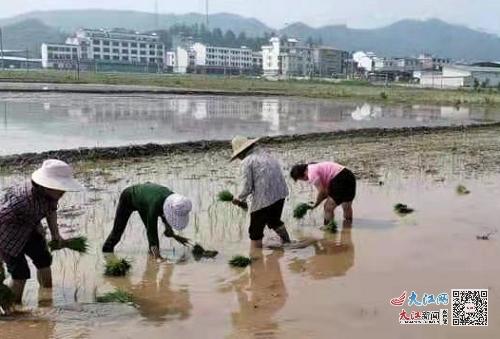 龙南市渡江镇:人勤春来早,不负春光抢农时(图)