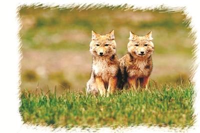 保护生物多样性 让地球更美丽