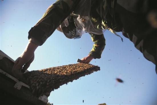 无锡养蜂人:百花深处见苍颜酿得心头一点甜