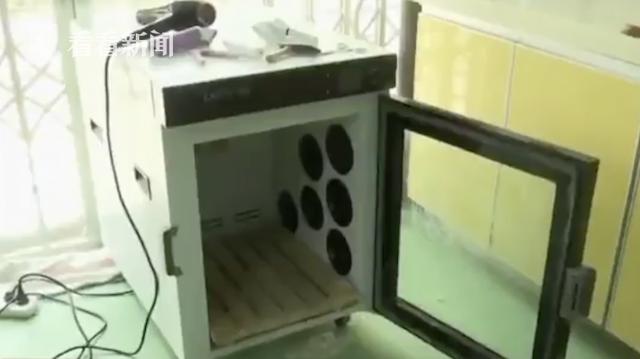 斗牛犬宠物医院洗澡后死亡 疑烘干箱温度过高