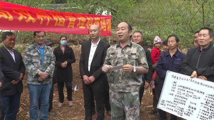 县领导到基度村开展魔芋优质高产高效种植管理科技培训