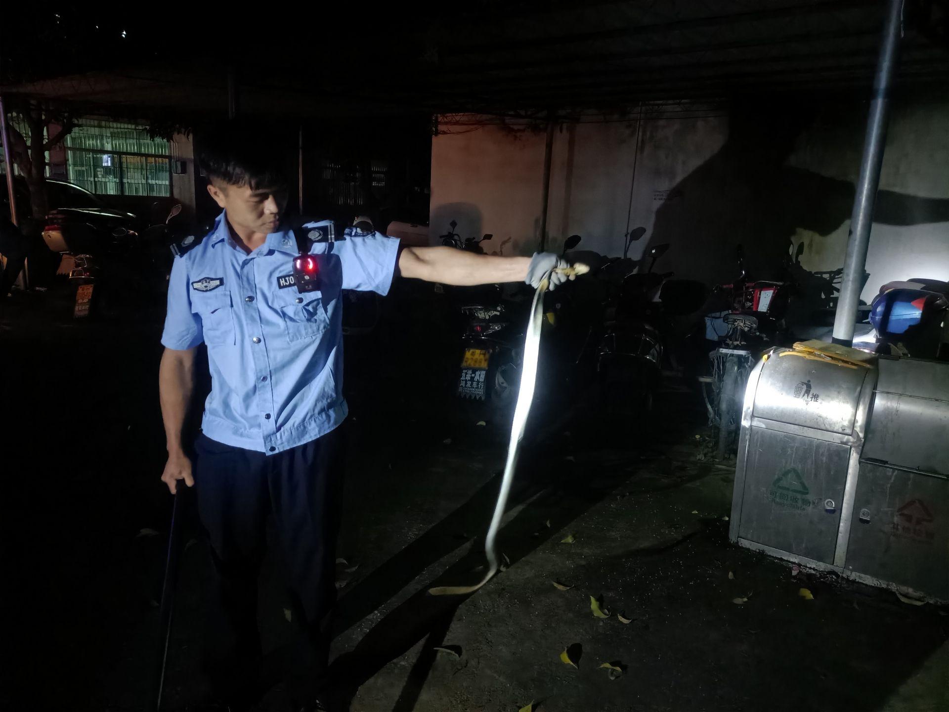 肇庆市怀集县警方深夜校园捕毒蛇,护师生平安