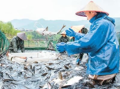 海蜇、毛虾、丁香鱼、口虾蛄、鱿鱼纳入许可——伏休期间,5类品种可捕捞