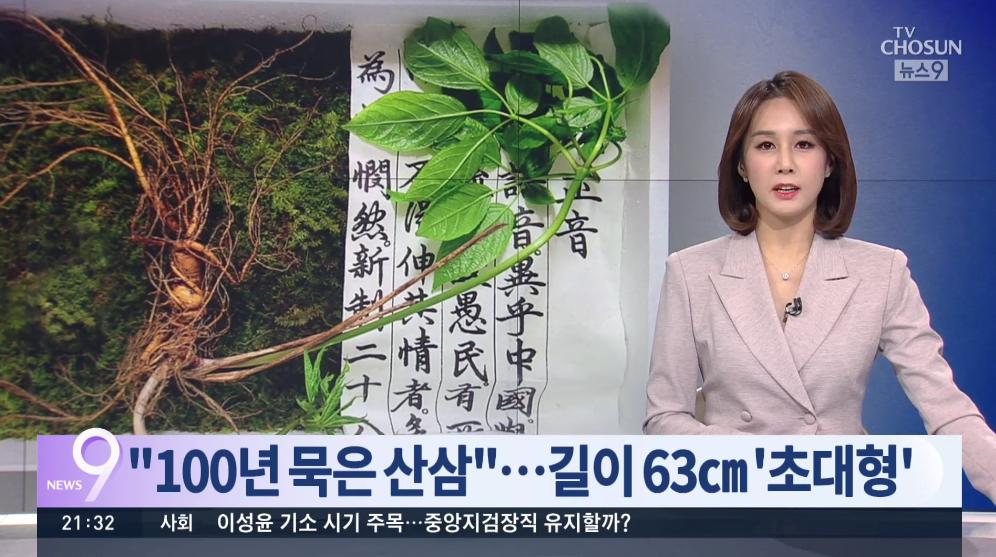 韩国大妈山上挖出百年野人参:个头大 估价9000万韩元