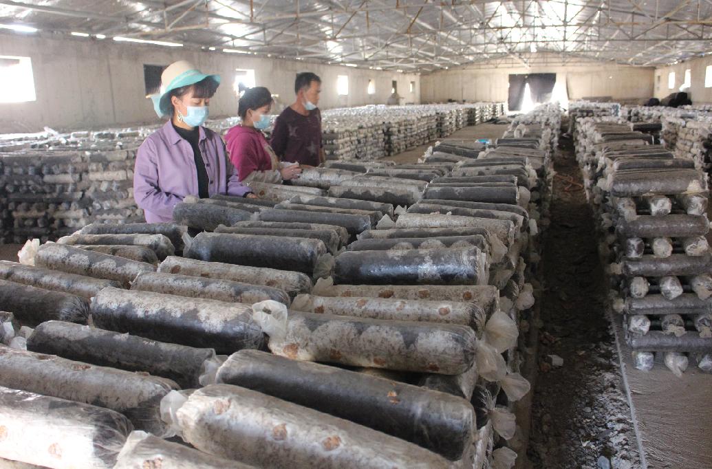 地道甘味丨张掖:食用菌产业崛地而起