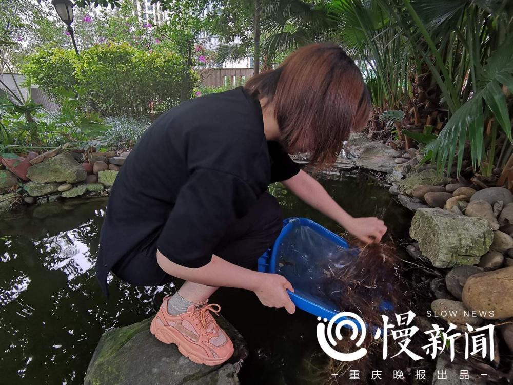 小区的小鱼小虾能做盘菜吗?