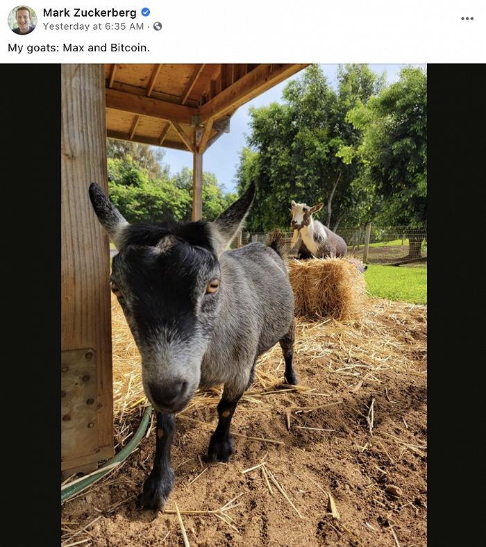"""Facebook CEO扎克伯格给宠物羊取名""""比特币"""""""