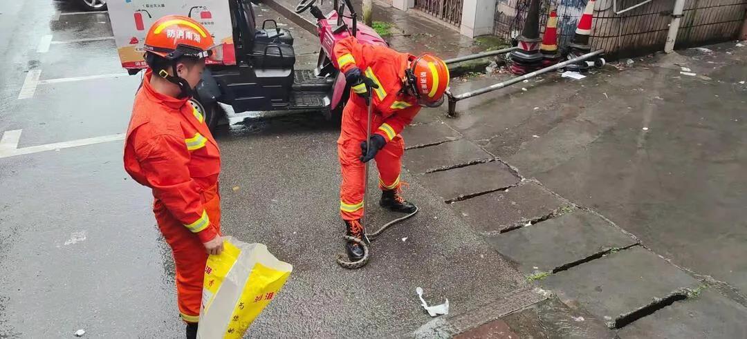 """凤凰古城民居现1米长蛇,这份""""防蛇攻略""""请收好!"""
