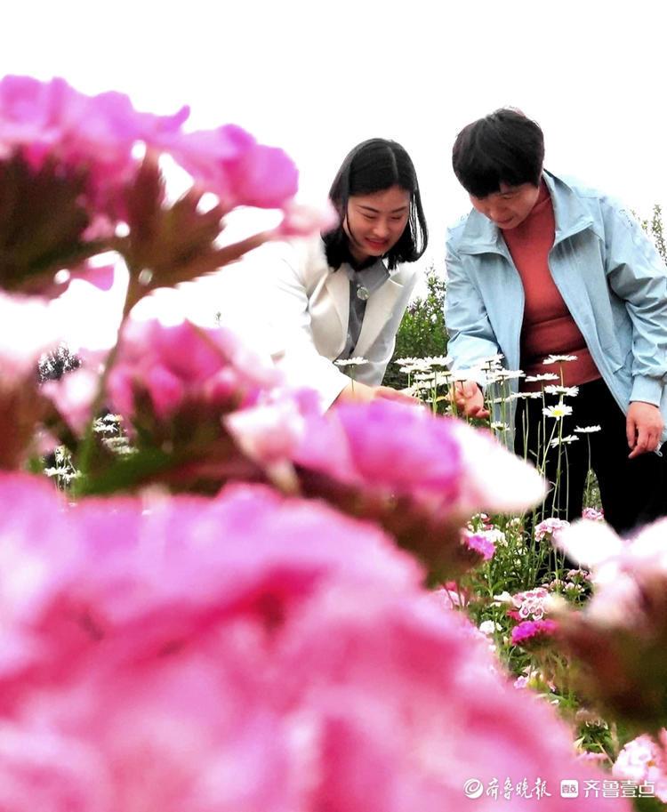 绚丽多彩花满园,打卡欣赏人不断