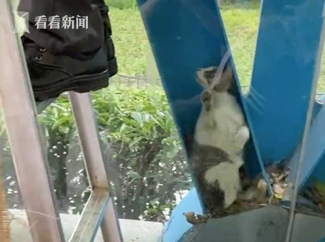 视频|猫咪落进玻璃钢架之间 工作人员一个妙招救下它