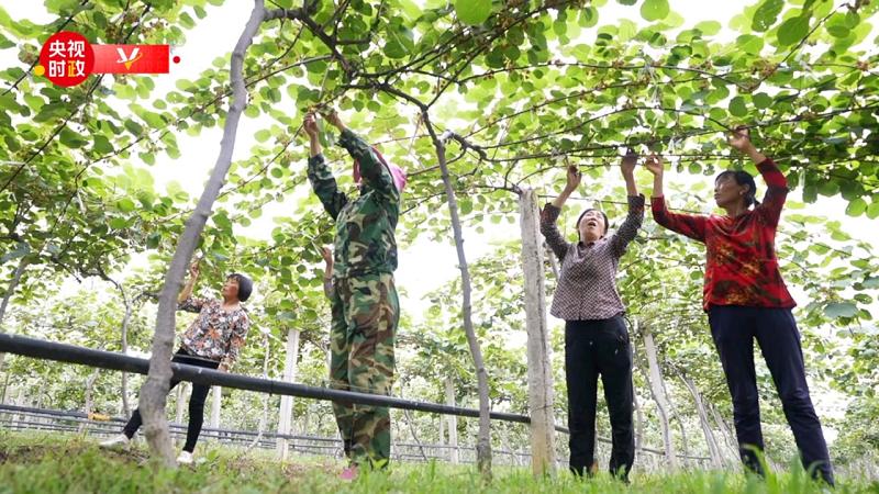 时政现场评丨跟随总书记的脚步 看猕猴桃艾草月季里的大作为