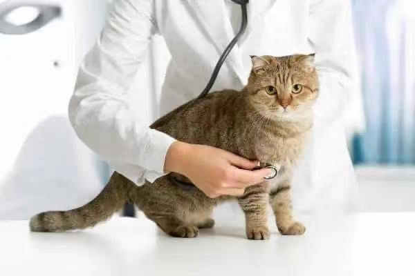 猫猫狗狗也要好好看病呀!公益诉讼助力宠物医院专项整治