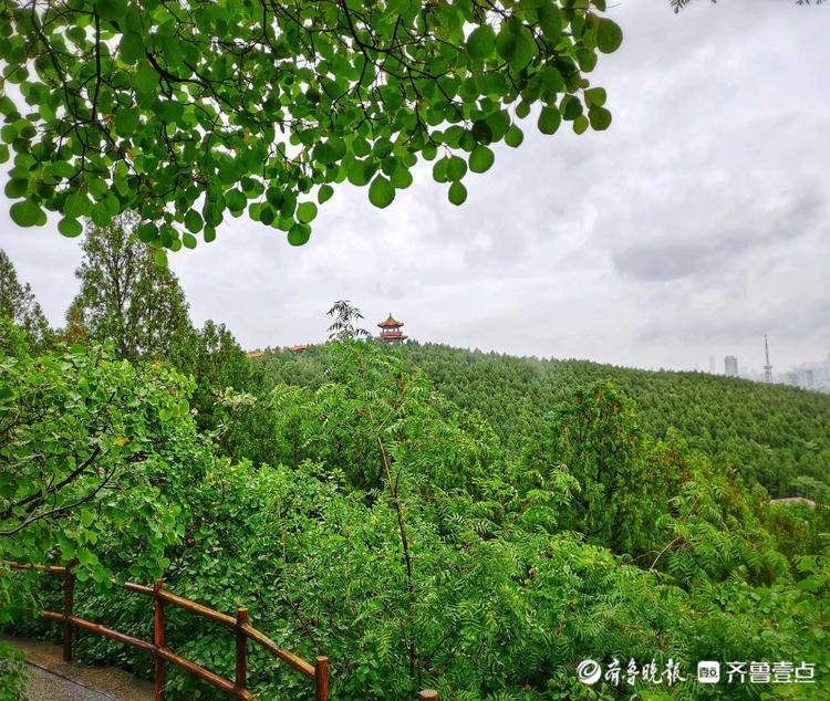 情报站|淅淅沥沥小雨至!漫步济南英雄山风景区,别有一番韵味