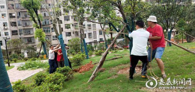 暴风雨过后  园林部门迅速排除隐患保生产