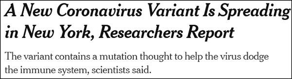 """""""研究人员报告:一种新的变异新冠病毒正在纽约传播"""",《纽约时报》2月报道截图"""
