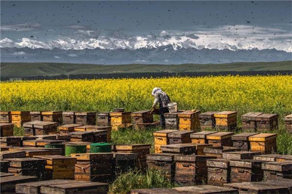 在山里,遇到养蜂人家,遇到真实的生活