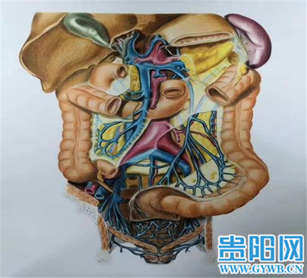 贵州这所学校学生画的人体器官结构图栩栩如生