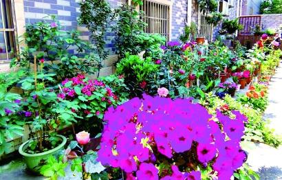 小小庭院2000盆花卉争奇斗艳