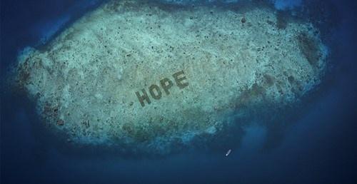 玛氏旗下猫粮品牌SHEBA推出全球最大的珊瑚修复计划   美通社