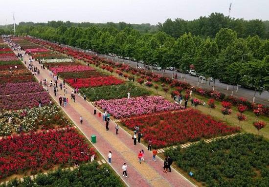 玉润花香织锦绣:2021南阳市玉雕文化节暨月季花会综述