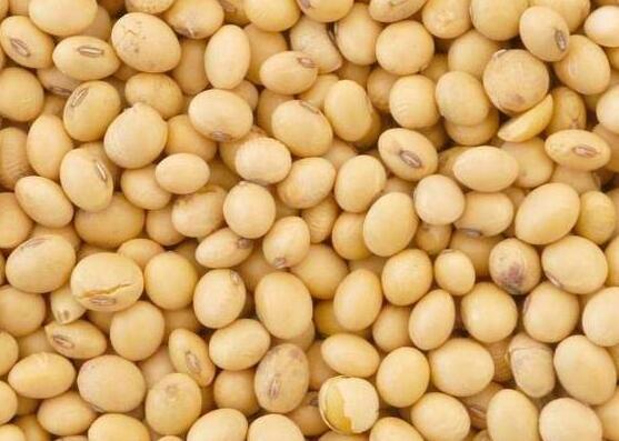 春季养生不妨多吃这4种豆 富含各种维生素