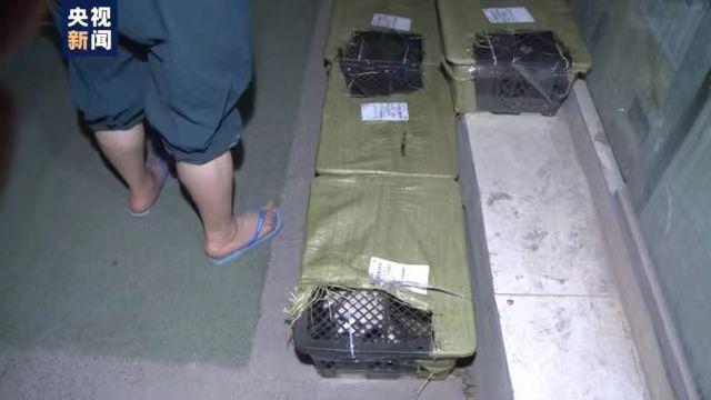 """四川邮管局通报:""""宠物盲盒""""涉事企业被立案调查"""