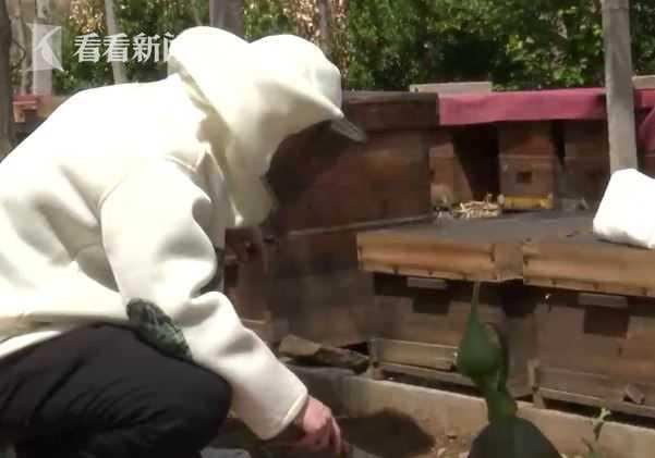 不做上海白领回老家养蜜蜂 这个90后闯出一片天