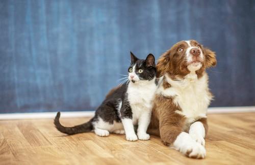 汉优宠粮:更适合多品种犬猫的中国化喂养