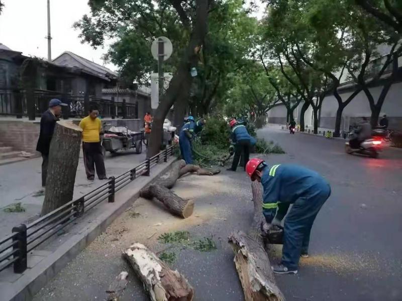 北京大风致41棵树木倒伏 园林绿化部门连夜巡查处置