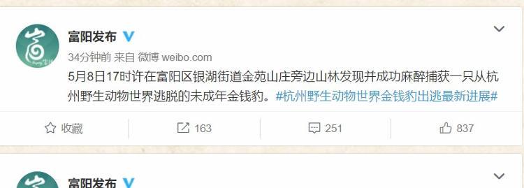 杭州出逃豹子捕获画面曝光:第二只没被狗咬死 系麻醉后捕获
