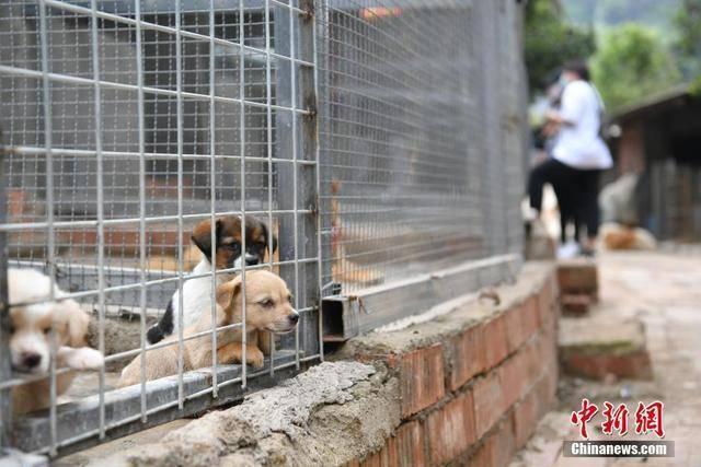 宠物盲盒出圈又出格 或涉嫌多项违法