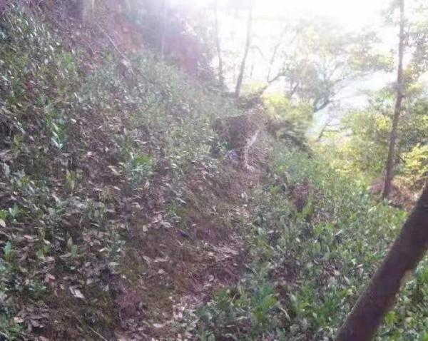 杭州野生动物世界三只金钱豹外逃,已追回一只,园区负责人被控制