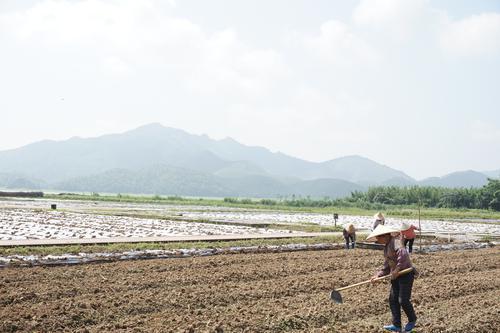 广东6个县(市、区)全面启动新一轮农村宅基地制度改革试点