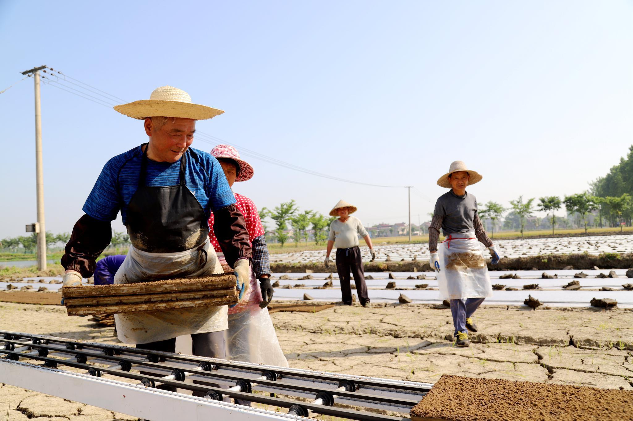 南京高淳桠溪机械化育秧节本增效促丰收