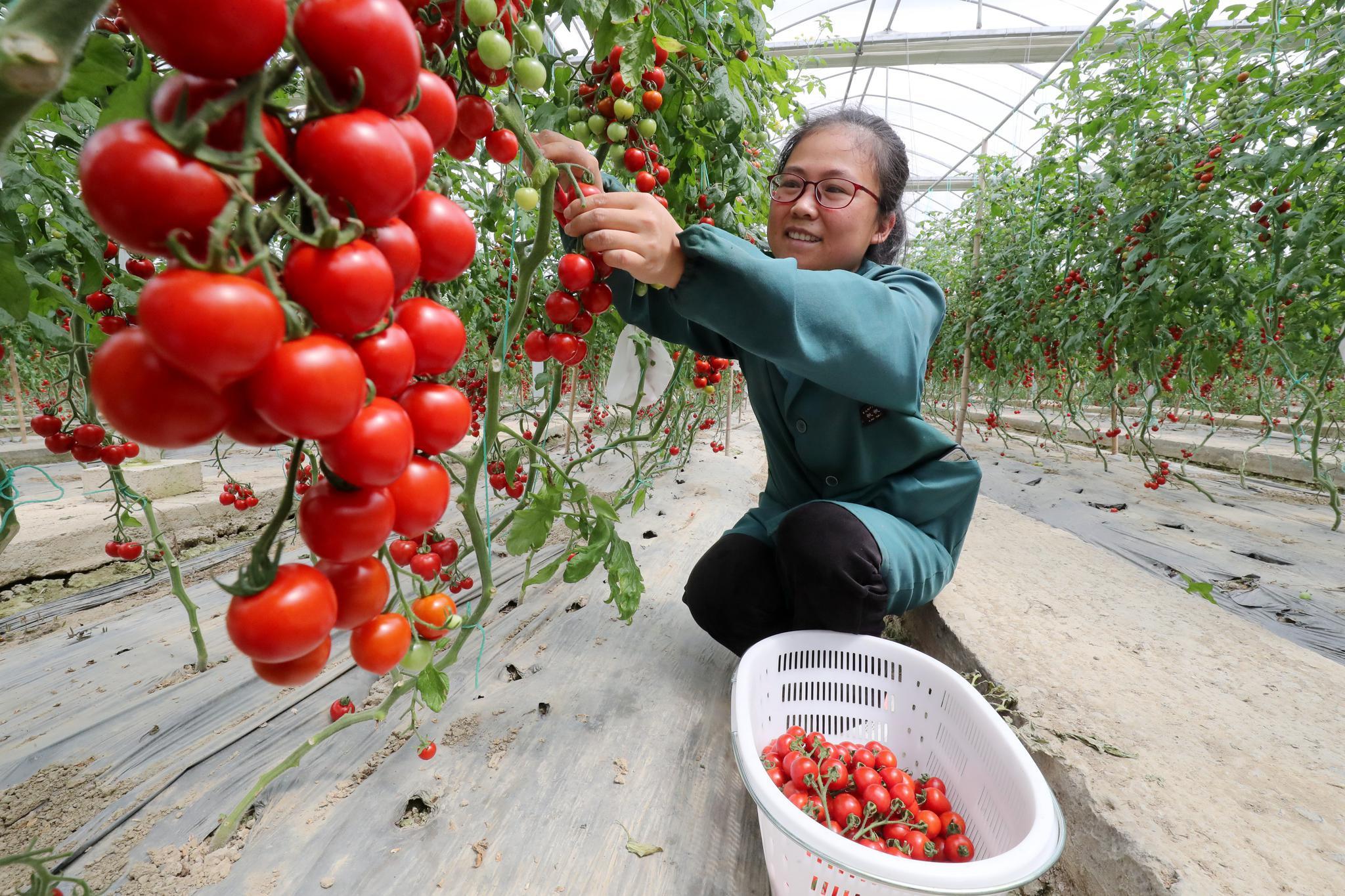 标准化智能化管理  德清智慧农业助增收