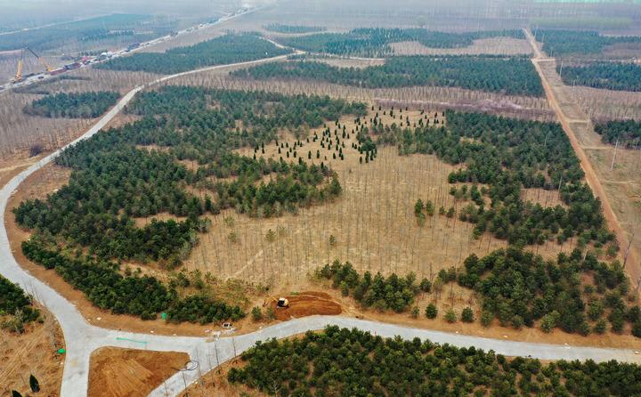 3年造林41万亩 雄安新区为地球增添一抹绿