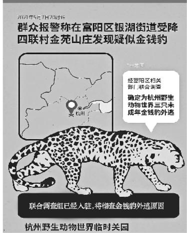 杭州三只未成年金钱豹出逃 已捕获两只
