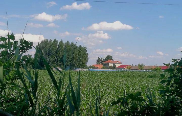 额外收益再分配,让农民卖粮不吃亏
