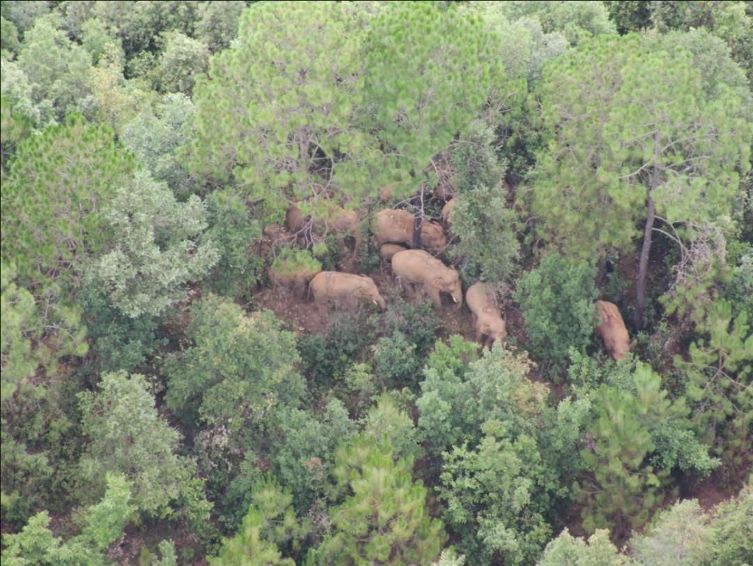 象群继续向南迁移