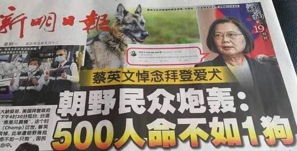 """连新加坡都嘲台湾:""""500人命不如1狗"""""""